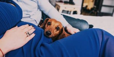 Mi perro me huele el ombligo: esto es lo que quiere decir