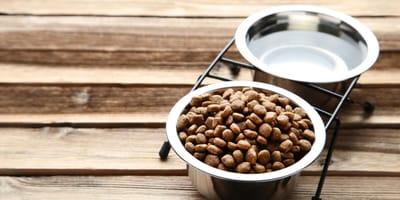 ¿Cuántas veces debe comer un gato y es bueno que tenga libre acceso a su comida?