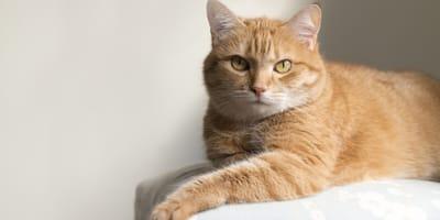 Mi gato está muy flaco pero no deja de comer: causas y tratamientos