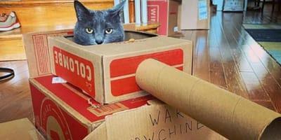 Every kitty needs a cat tank