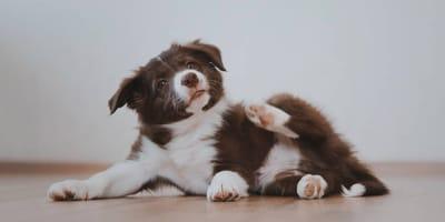 Cómo quitarle las pulgas a un cachorro de forma segura y eficaz