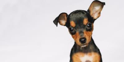 Nombres para perros pequeños inspirados en… ¡famosos!