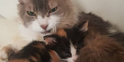gatos  refugio