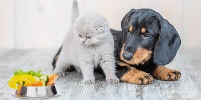 Hund oder Katze vegetarisch ernähren – was ist möglich und gesund?