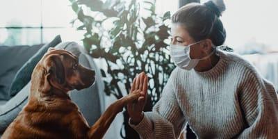 cane e donna che indossa mascherina