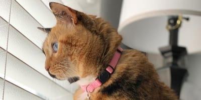 gato mira por la ventana