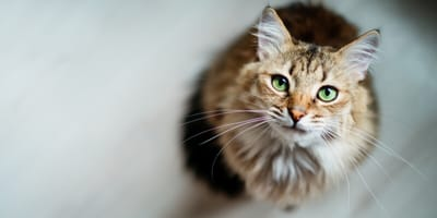 How can I reduce stress-related illnesses in my cat?