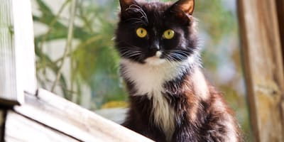 Quali sono i sintomi di un gatto stressato?