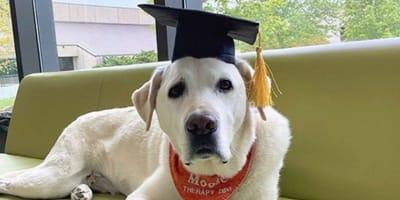 Moose 'graduated' last week