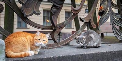 Dwa bezdomne koty na murku