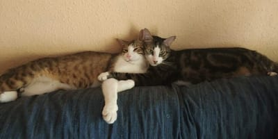 gatos abrazados