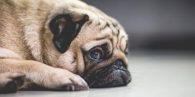 How do I help my stressed dog?