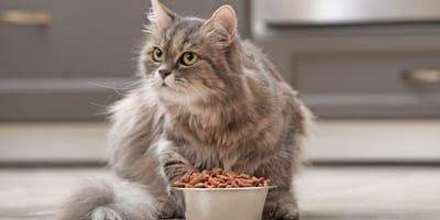 Jak karmić kota ze schorzeniami układu moczowego?