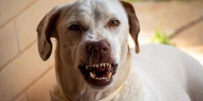 ¿Por qué mi perro le ladra a una persona en especial?