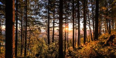 Spaceruje z psem w lesie, kiedy dostrzega ogromny cień i zaczyna krzyczeć