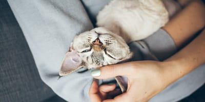 Por qué ronronea un gato: las causas del ruidito más adorable del mundo