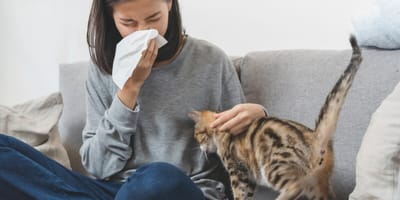 Cat allergies: causes and treatment