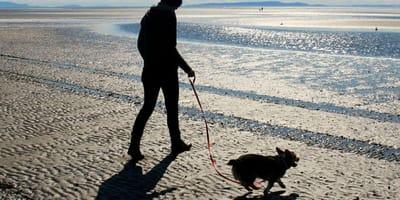 Woman walks dog on beach