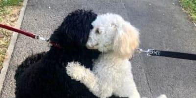 Due-cani-bianco-e-nero