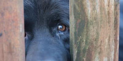 Perro maltrato animal