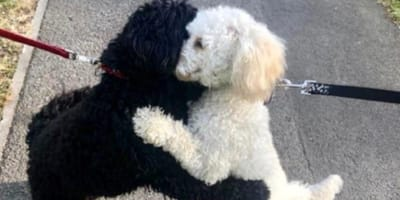 Adorable moment pup hugs long-lost sister from the same litter