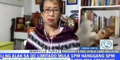 La emisión en vivo va bien, ¡hasta que sus gatos empiezan a pelearse!