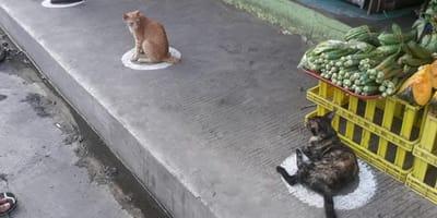 <p>L&#39;istinto naturale dei gatti applicato alla quarantena regala un risultato incredibile.</p>