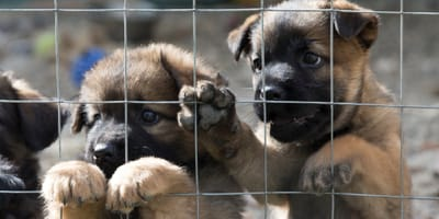 <p>Facilitar el proceso de adopci&oacute;n (responsable) ayuda a que m&aacute;s gente se anime a darle una familia a los perritos de la perrera.</p>