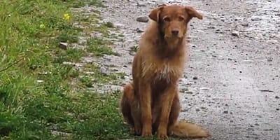 caso maltrato animal perro noel rescate animal granada