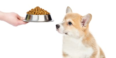 Alimento para cachorro: ¿qué debe comer un perrito bebé?