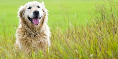 Welche Fette sind bei der Ernährung für gesunde Hunde wichtig?