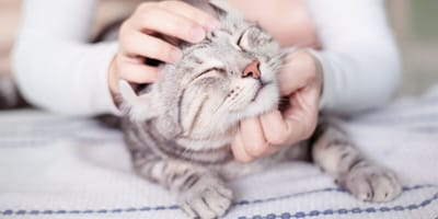 gato domestico esperanza de vida