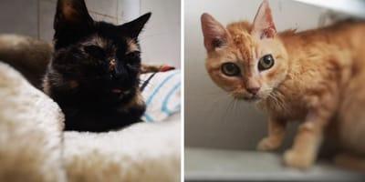 ayuda gatos ancianos protectora almeriya