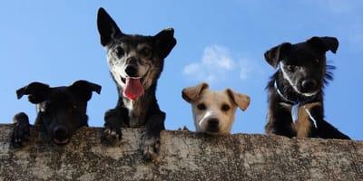 Cztery różne psy.