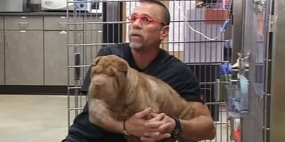 Owners take Shar Pei to clinic after weight loss: The x ray shocks the vet