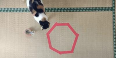 gatto con cerchio rosso