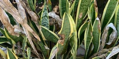 Kociak ukrył się w liściach. Tylko 10% najbardziej przenikliwych tropicieli jest w stanie go zauważyć!