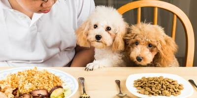 Cómo cortar la diarrea en perros con arroz: 3 recetas caseras y deliciosas