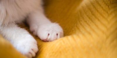¿Por qué los gatos amasan? Descubre las razones de este comportamiento
