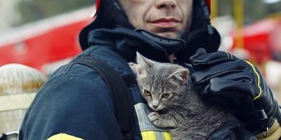 proteccion civil de monterrey rescata a gato de una noria