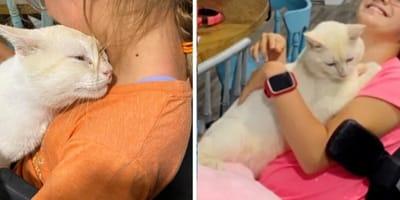 Biały kotek i dziewczynka.