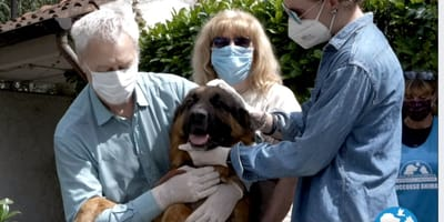 cane riabbraccia famiglia umana