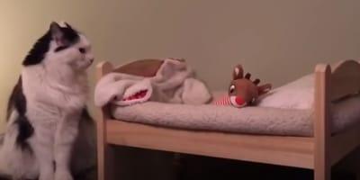 biało-czarny kot siedzi obok swojego miniaturowego łóżeczka