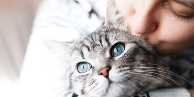 Le cose da sapere prima di prendere un gatto