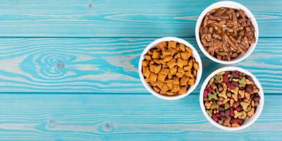 È meglio il cibo secco o quello umido per i gatti obesi?