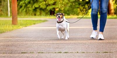 Al parco col cane nella fase 2: ecco qualche consiglio