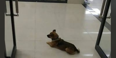 Dog waits at hospital for months after owner dies of Covid