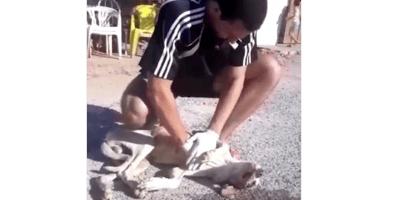 Resucita a un perro en la calle y el video le está dando la vuelta al mundo