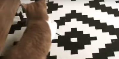 gatto con baffi bianchi
