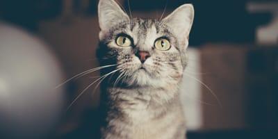Come risolvere i problemi digestivi del gatto?